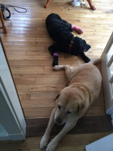 Writing with Labradors